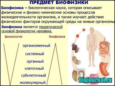 изображение Медицинская биофизика – что это за профессия