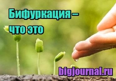 изображение Бифуркация – что это