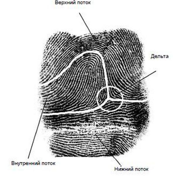 картинка Дактилоскопия – что это